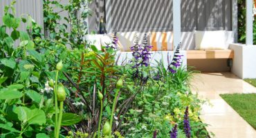Putney Garden Landscaping with Anna Wright