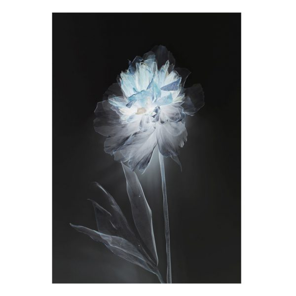Double Peony Limited Edition Print by Morgan-Davies Art at The Decorcafe - Cutout Image