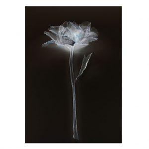 Single Peony Limited Edition Print by Morgan-Davies Art at The Decorcafe - Cutout Image