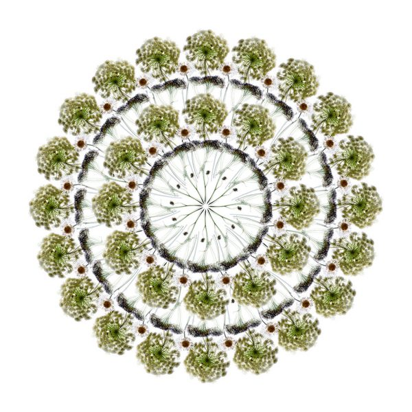 White Flowers (II) Limited Edition Print by Morgan-Davies Art at The Decorcafe - Cutout Image