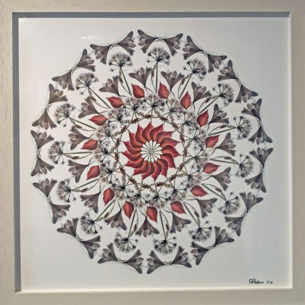 White Flowers (lll) Limited Edition Print by Morgan-Davies Art at The Decorcafe - FramedImage